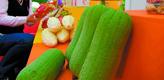 台湾蔬菜亮相大陆