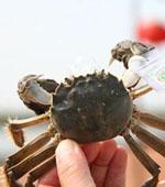 天津七里海 带着宝宝钓螃蟹